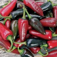 Chili PEPPER (Hot) Hungarian Black, Frö till Chili