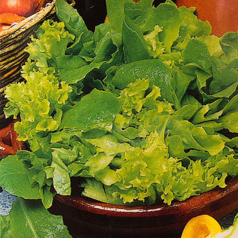Sallad LETTUCE Mixed Green Leaves, Frö till Sallad