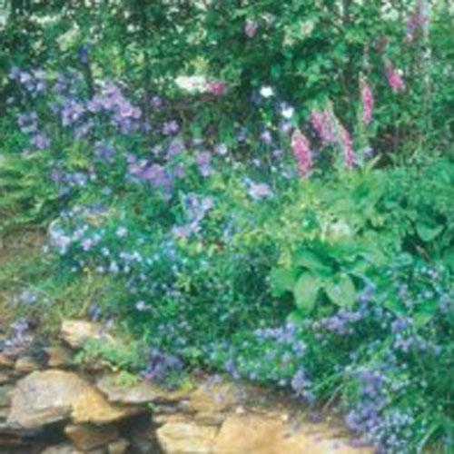 Woodland fröblandning Vilda blommor - Woodland Mixture#, Frö till Woodland fröblandning