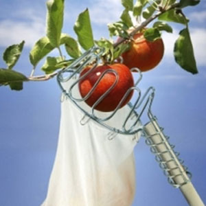 Äppelplockare - Quick picker-äppelplockare