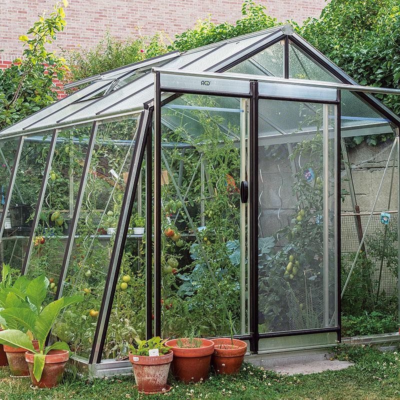 Vaxthus Action med tomatodling och nätdörr