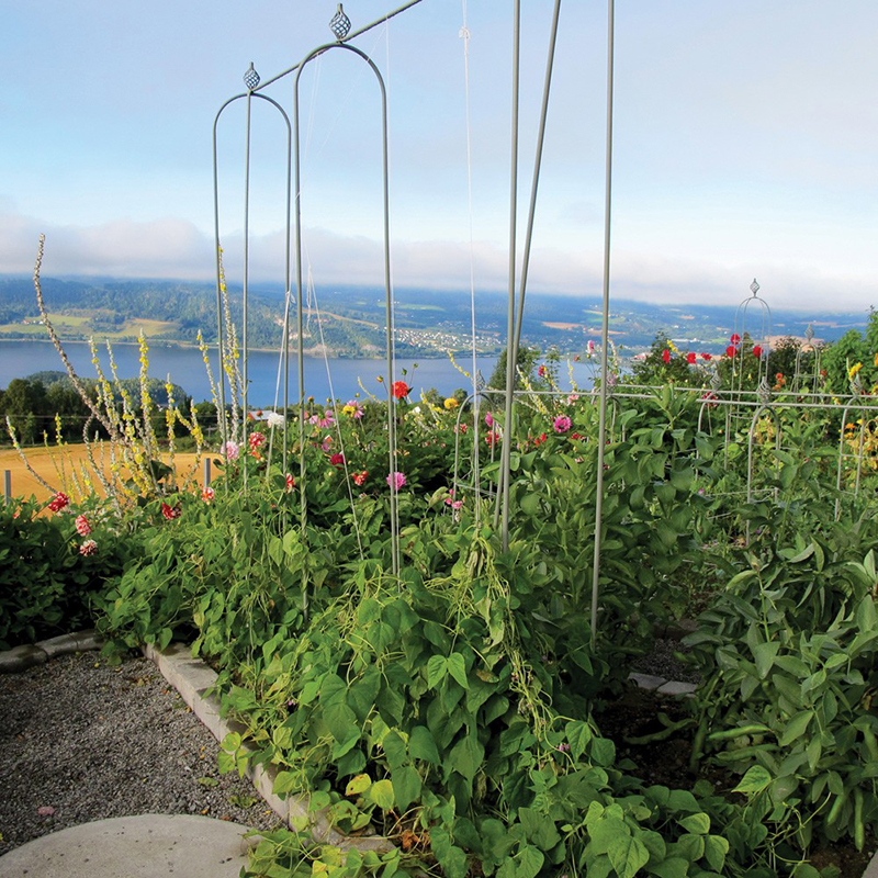 Växtstöd till köksträdgården och klängväxter