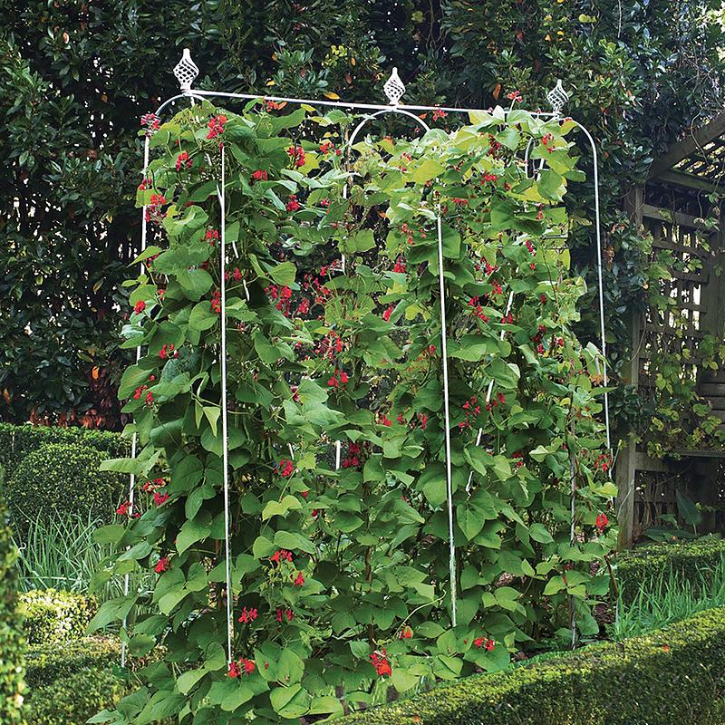 Smidesstöd för klängäxter i trädgården