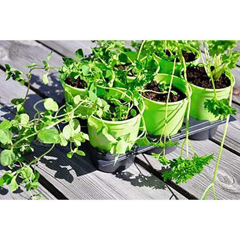 Kruka med tråg 6 cm, 12-pack Limegrön, Krukor med tråg för odling