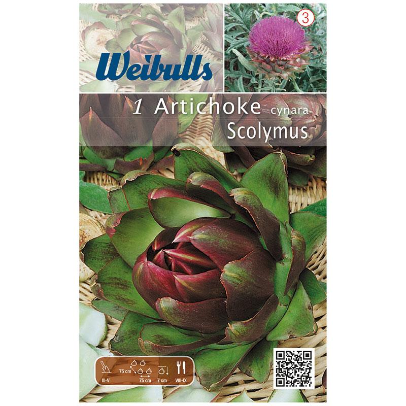 Kronärtskocka, Purple of Romagna, rötter/knöl, Rötter för plantering av Kronärtskocka