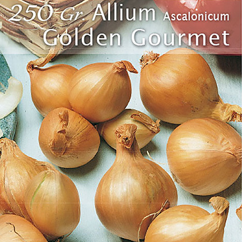 Schalottenlök Golden Gourmet, gul sättlök-SättlökGulSchalottenlök, GoldenGourmet