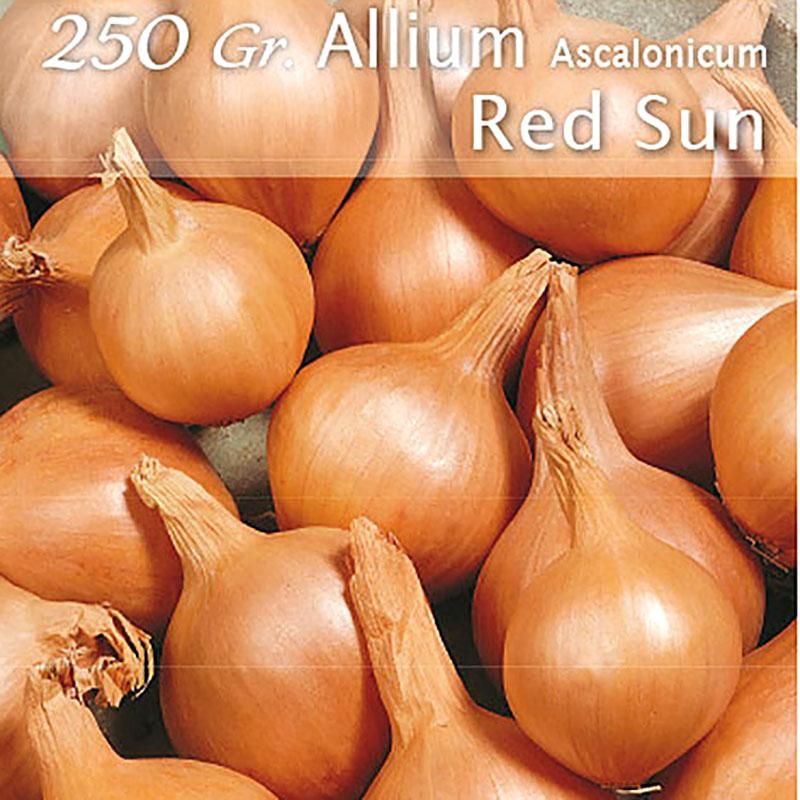Schalottenlök Red Sun, röd sättlök-SättlökRödSchalottenlök,Red Sun