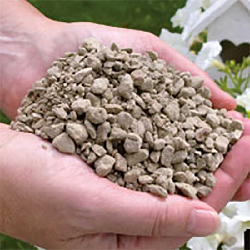 Pimpsten för odling, sticklingar och plantor