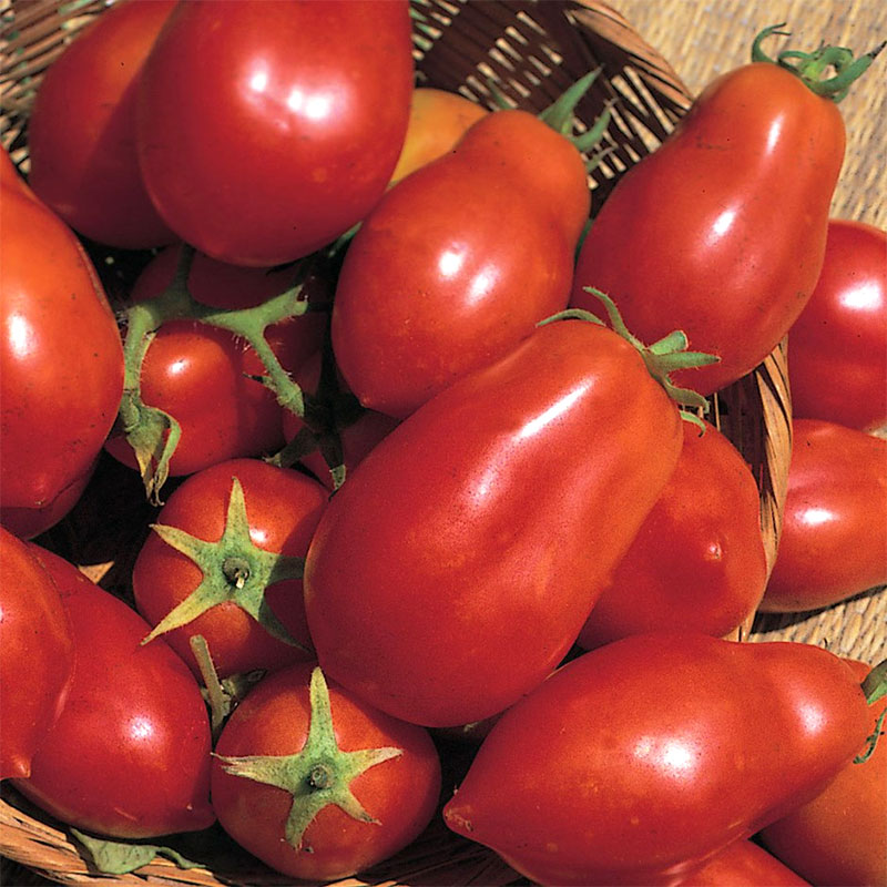 Frö till Tomat 'San Marzano Red Plum'