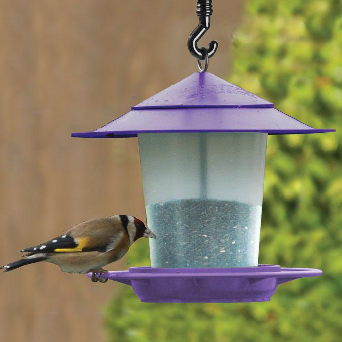 Fågelbord i Lila-fågelbord för nötter och fröblandningar