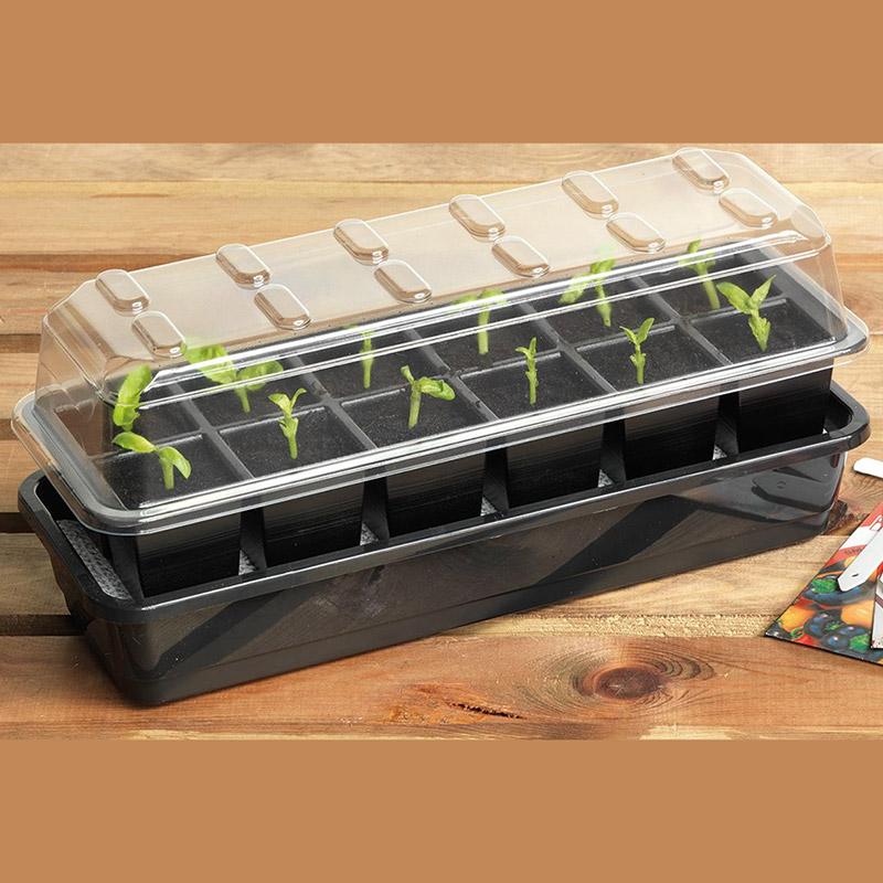 Seed Success miniväxthus med bevattning, 12 celler-Miniväxthus med 12 celler och underbevattning