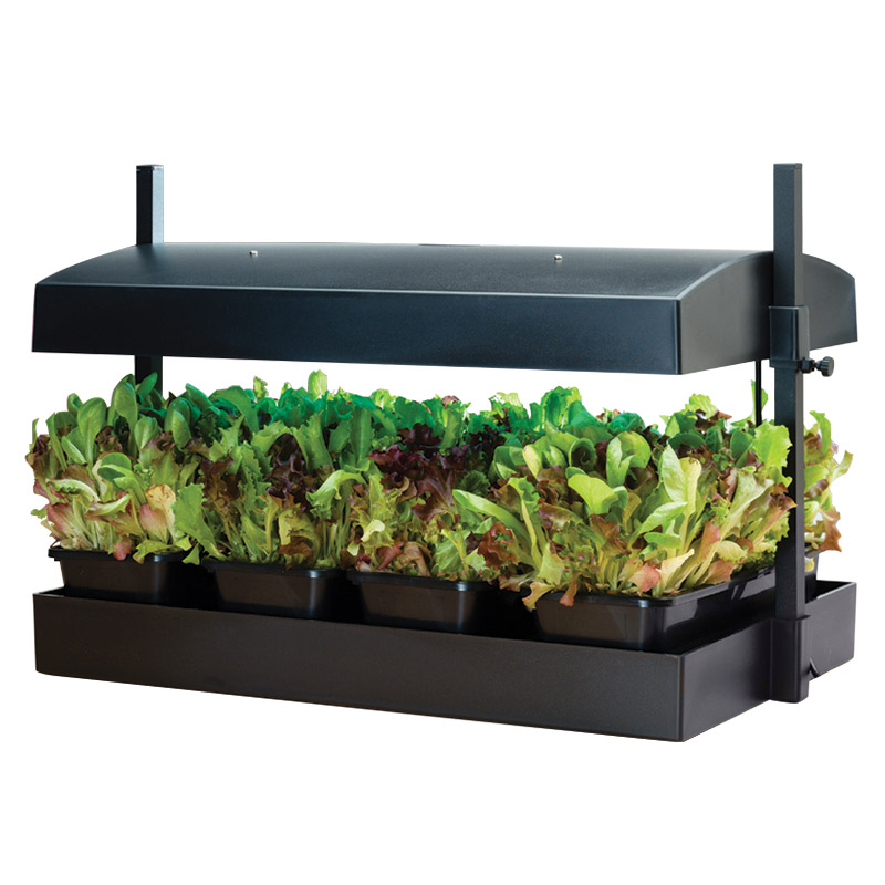Plats för Inomhusodling av plantor och fröer