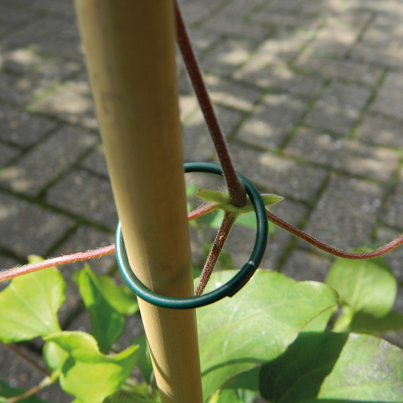 Växtstöd - ringar, 25-pack