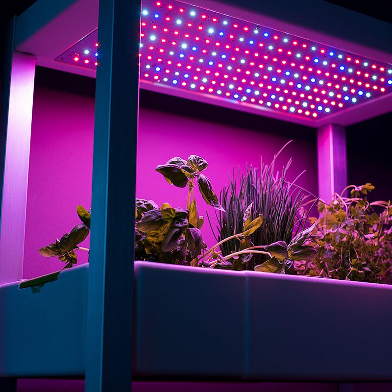 Växtbelysning med 440nm  och 660 nm