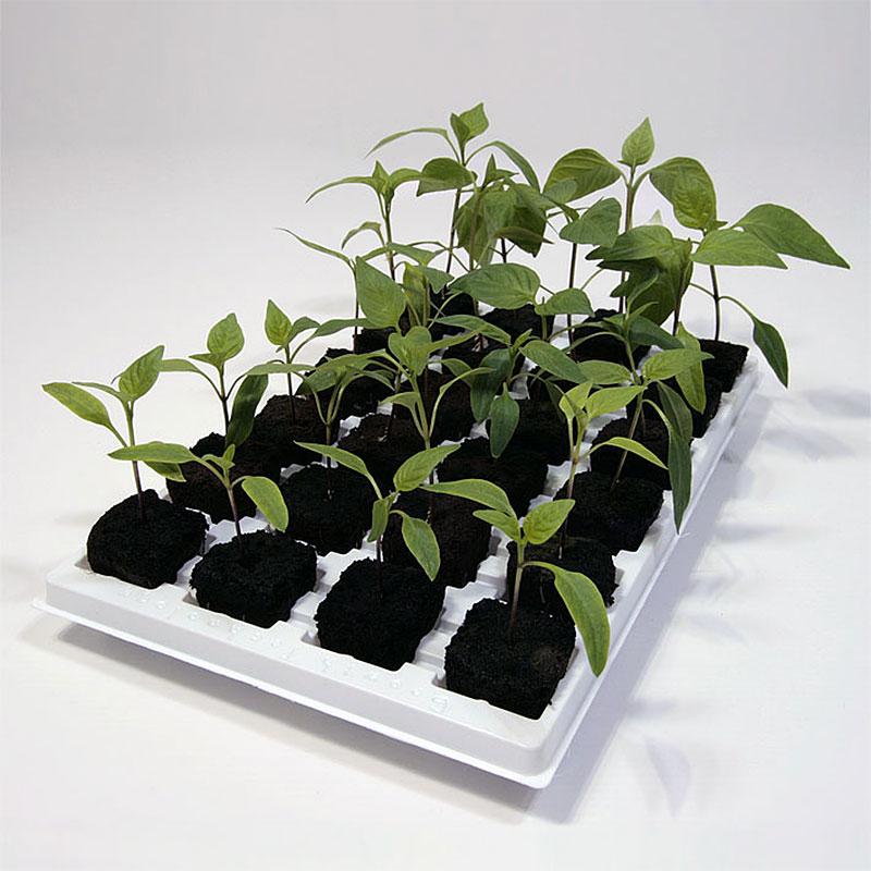 Root Riot - Bricka med 24 kuber, odlingskuber