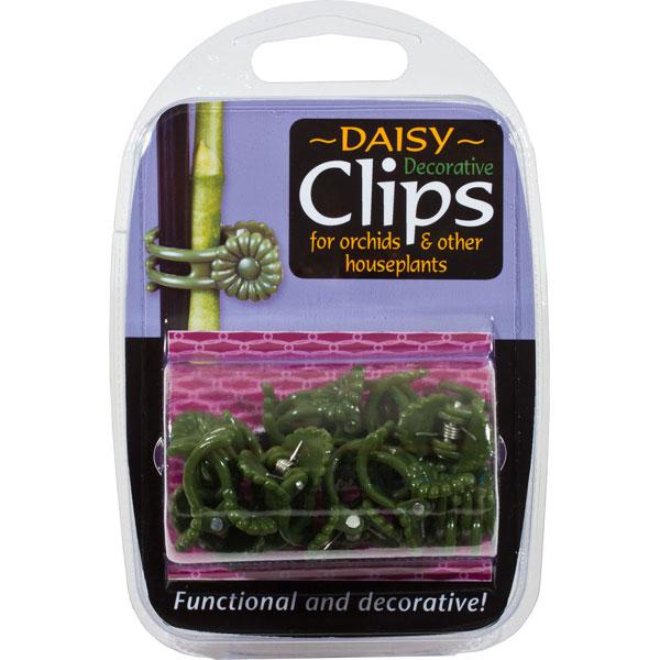 Orkidéclips - Daisy,