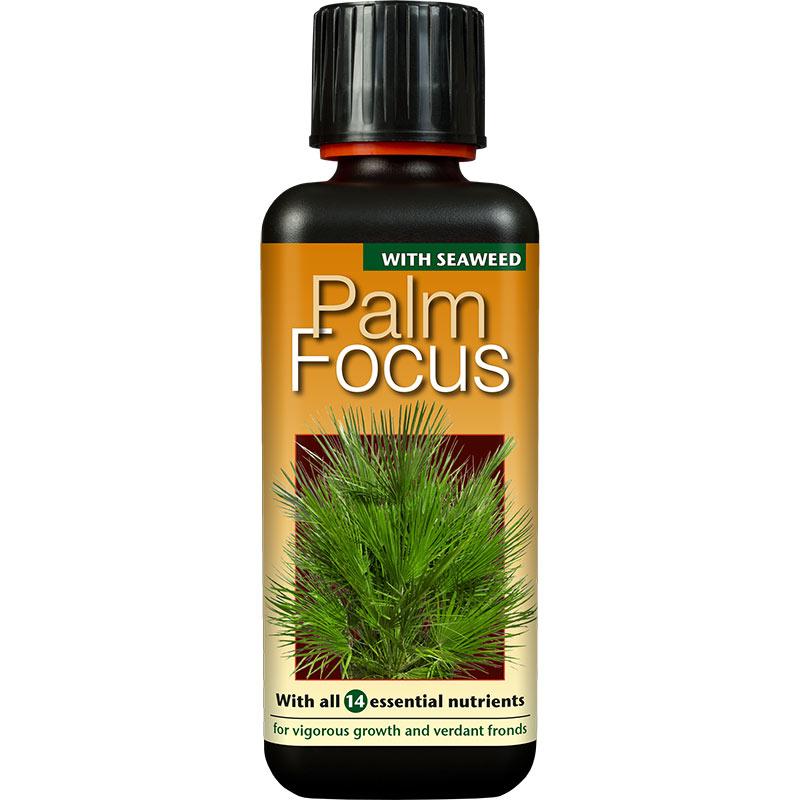 Palmnäring för palmer i kruka