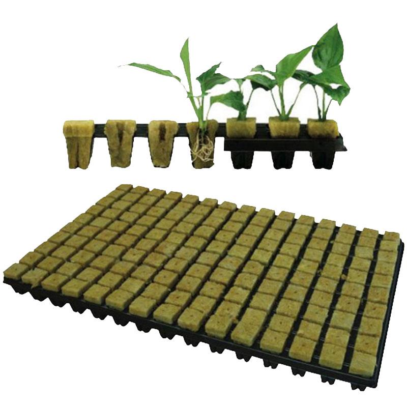 Bricka med rockwoolkuber med växtrötter