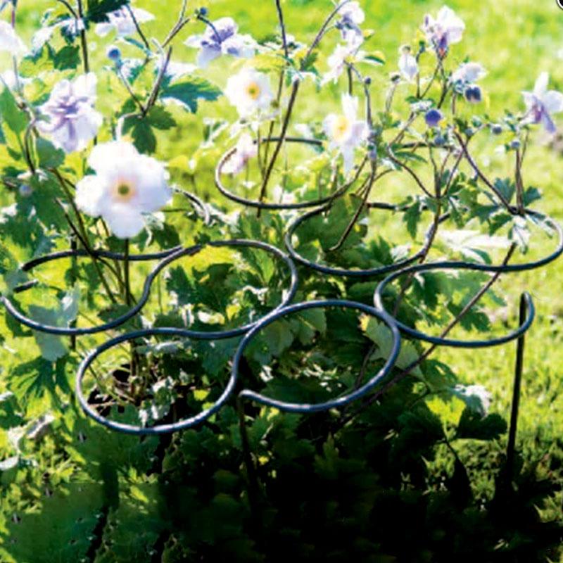 Växtstöd för perenner från Harrods