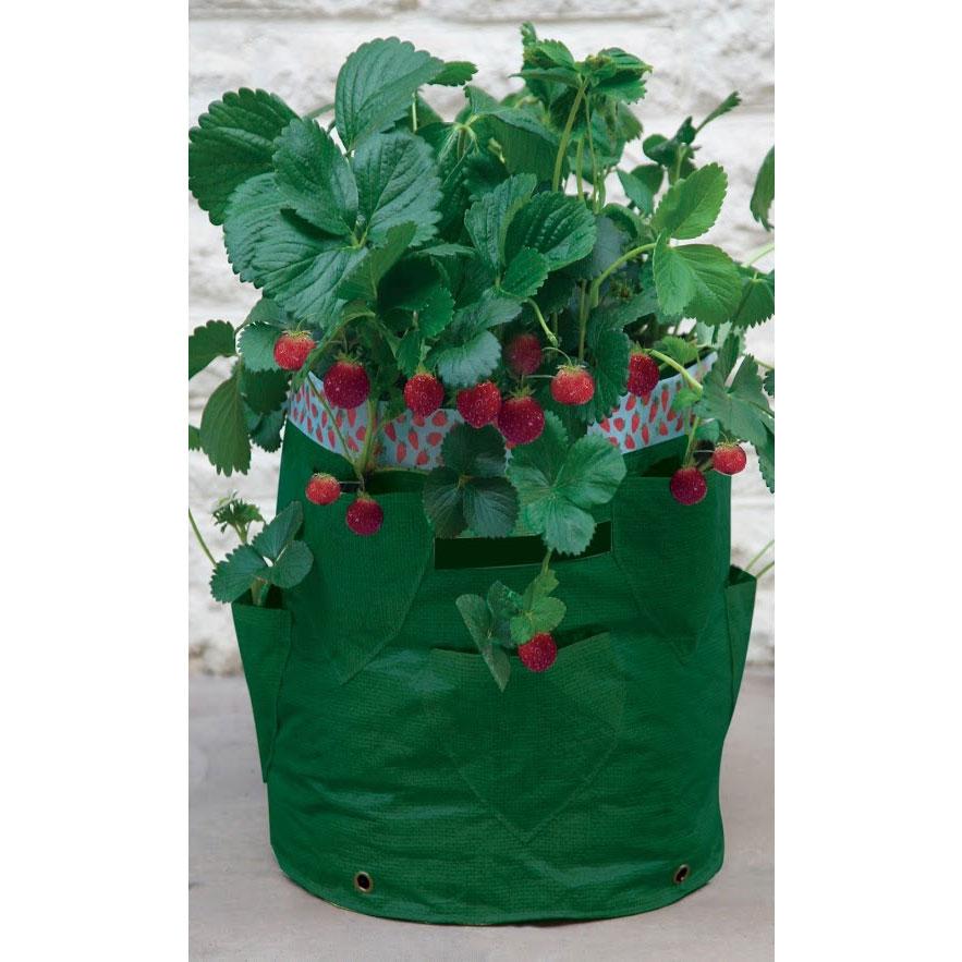 Ört- och jordgubbsodlingssäck Grön, 2-pack-Odlingssäck för odling av örter och jordgubbar på balkong och terass