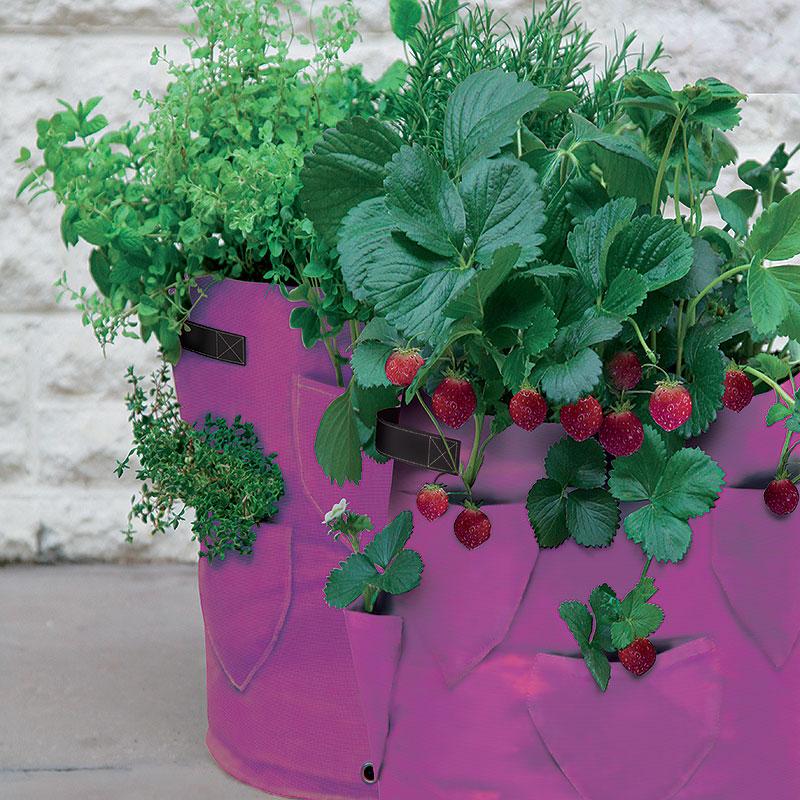 Ört- och jordgubbsodlingssäck 2-pack, Odlingssäck för odling av örter och jordgubbar på balkong och terass
