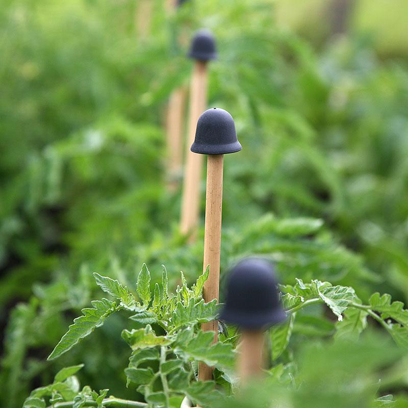 Växtstöd, CaneTopper svart, 10-p-CaneTopper - blompinneskydd, svart