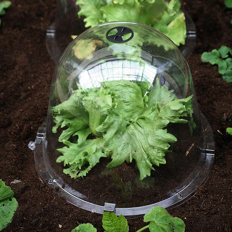Odlingsklocka King Size Victorian Bell, 2-pack, Odlingsklocka för drivning av växter