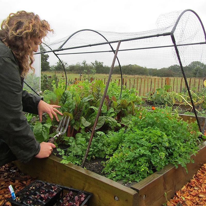 Odlingsbur Grow Cage, Odlingsbur för köksträdgården