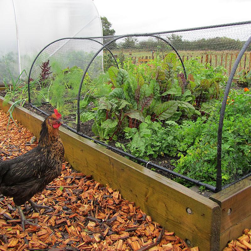 Odlingsbur Grow Cage-Odlingsbur Grow Cage för köksträdgården