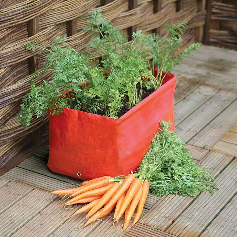odlingssäck för morötter