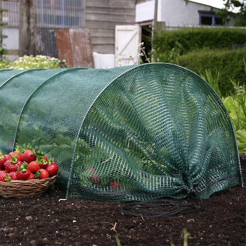 Odlingstunnel med nät för odling av grönsaker