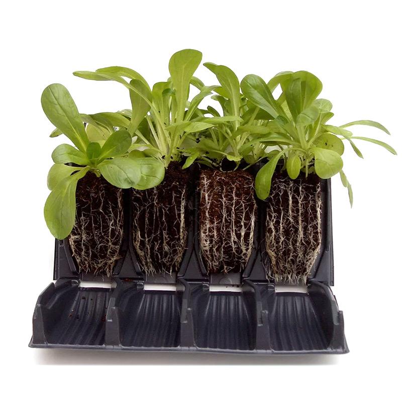 Rapid Rootrainer - öppningsbara pluggar, Rootrainer pluggar för odling av fröer och sticklingar