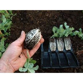 Rapid Rootrainer - öppningsbara pluggar-Rootrainer pluggar för odling av fröer och sticklingar