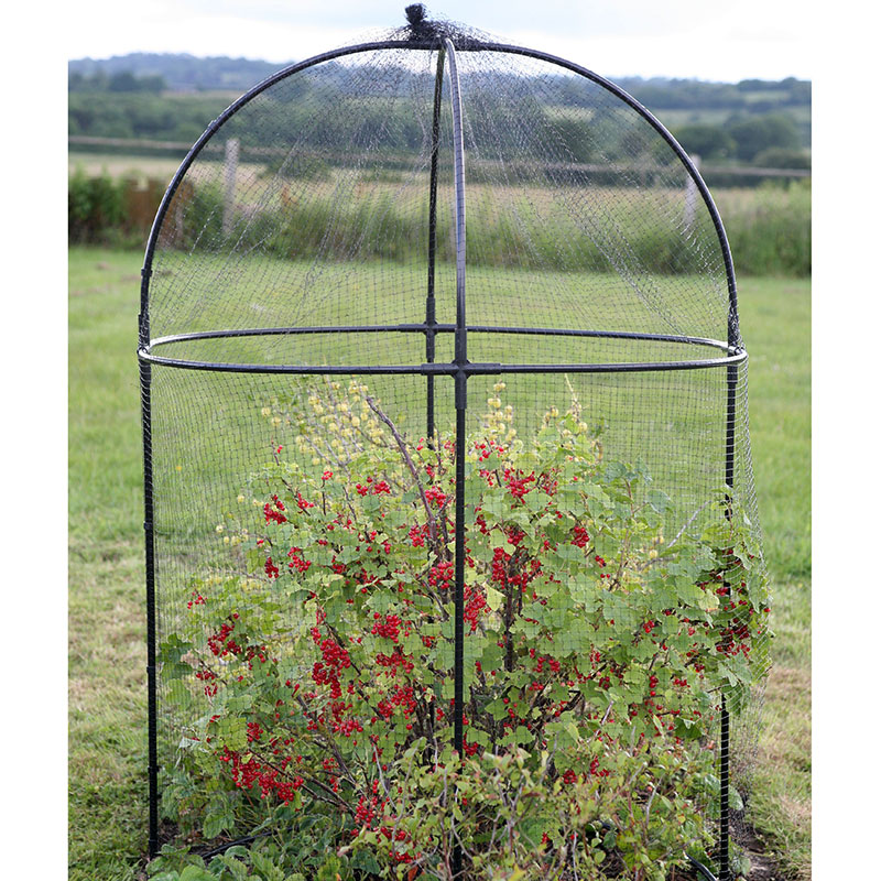 Odlingsbur Round Fruit Cage-Rund Odlingsbur Round Fruit Cage