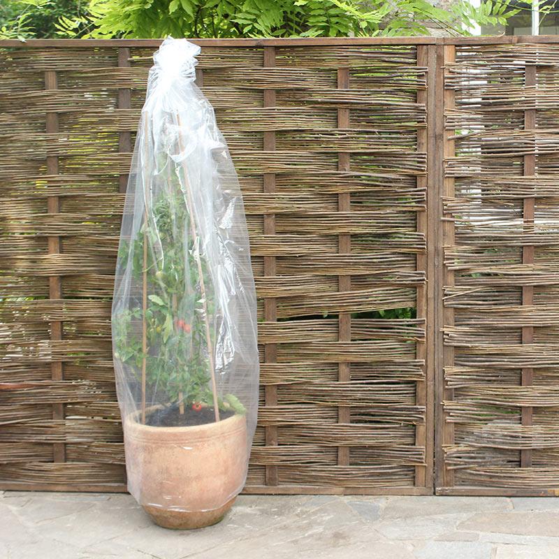 Skyddsplast till tomatplantor