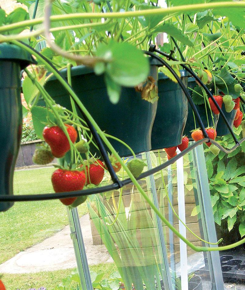 Bevattningslösningar för trädgård och växthus