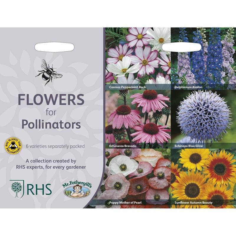 Frö till Blommor för pollinatörer 6 sorter