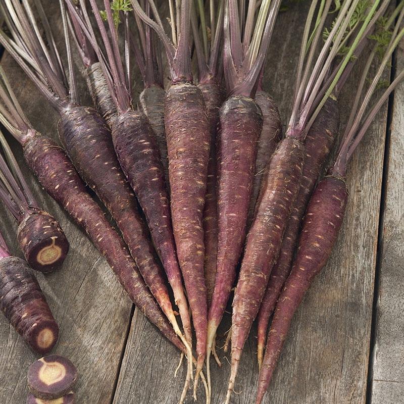 Frö till Morot 'Purple Sun'  F1, Daucus carota ssp sativus