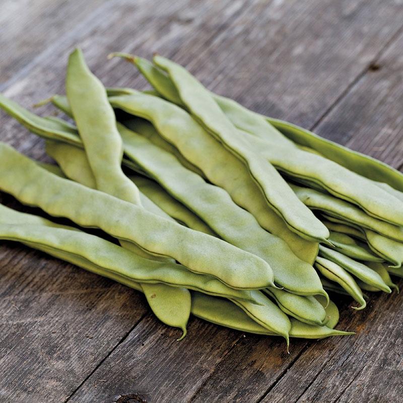 Frö till Skärböna 'Limka', Phaseolus vulgaris