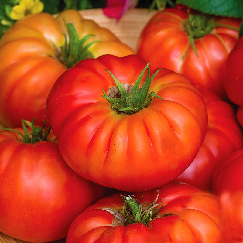 Tomat TOMATO Bountiful F1-Frö till Tomat TOMATO Bountiful F1