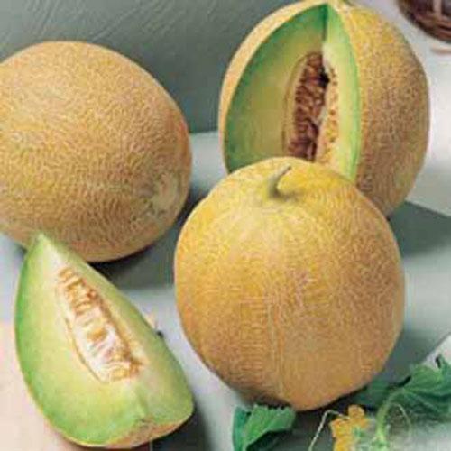 Frö till Melon