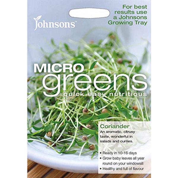 Frö till koriander odlad som micro-sallad