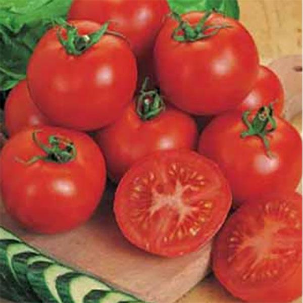Tomat ORG TOMATO Moneymaker-Ekologiskt frö till Tomat Org Tomato Moneymaker