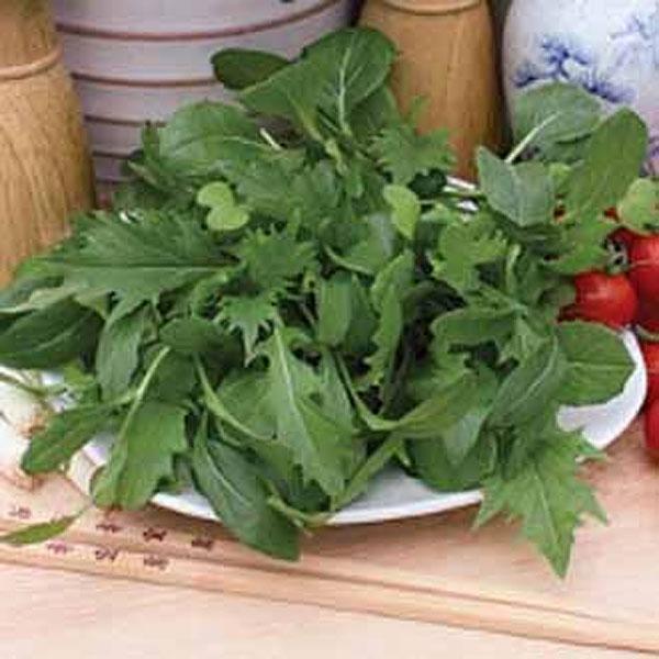 Frö till Sallad mixed leaves