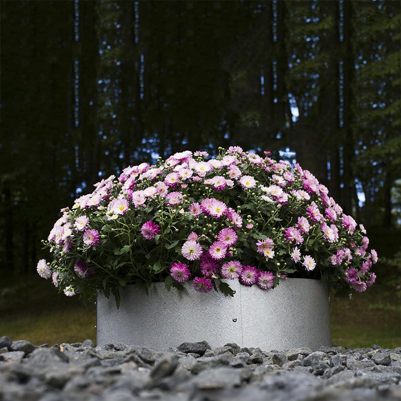 Planteringskant övergång höger aluzink, 120-180 mm, Växtodling med cirkelformad trädgårdskant