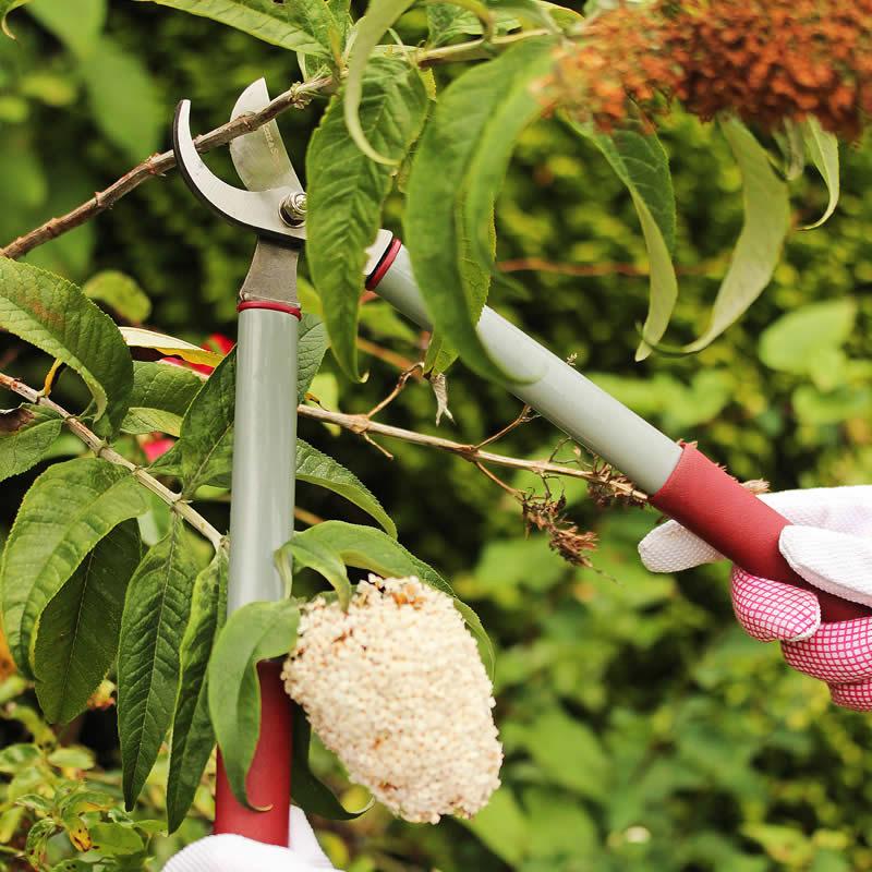 Grensekatör för beskärning av buskar och träd