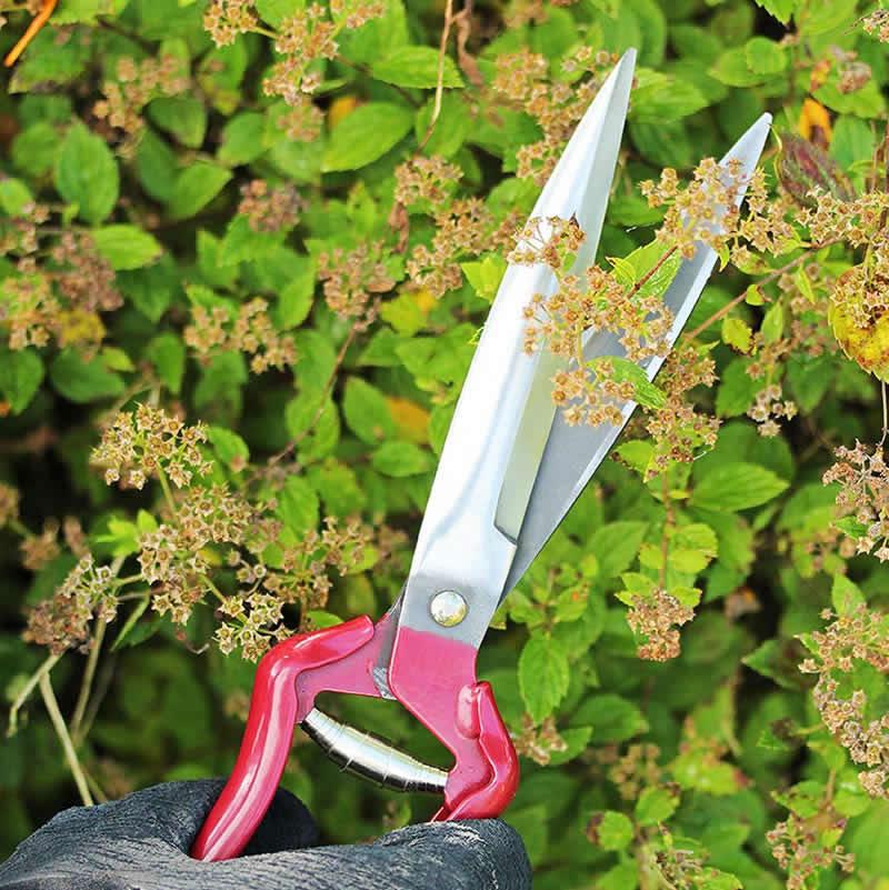 Perennsax för att putsa överblommade perenner och buskar