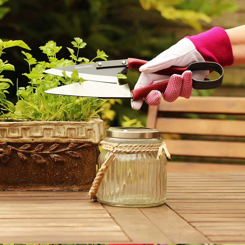 Traditionell trimningssax för formklippning av växter