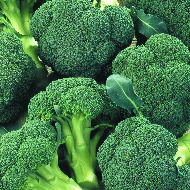 Broccoli, Ironman F1-Fröer till Broccoli, Ironman F1