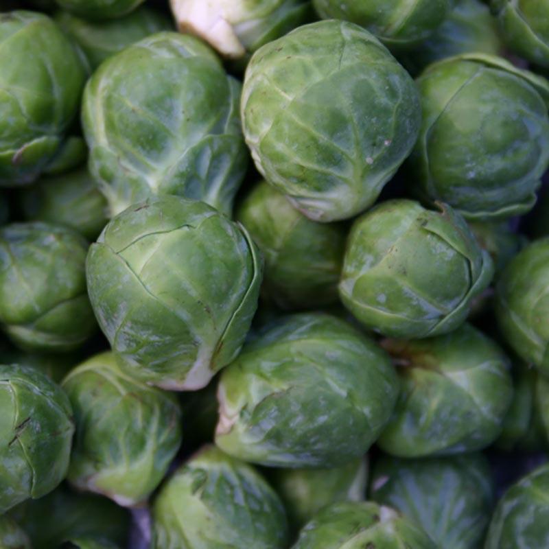Brysselkål Groninger, organic-Ekologiskt frö till Brysselkål Groninger